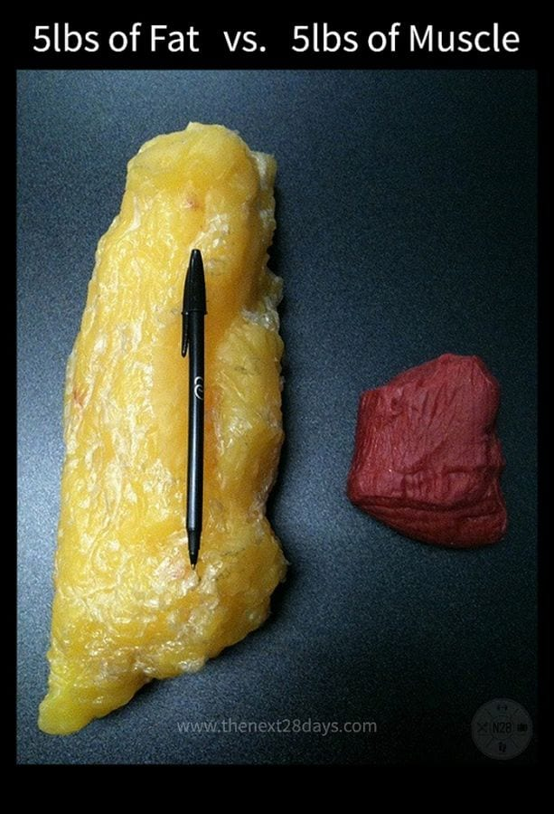 gordura versus musculo