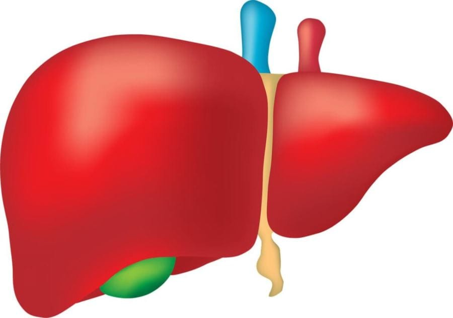Mito #5 – Comer Gordura Leva Ao Acúmulo De Gordura No Fígado
