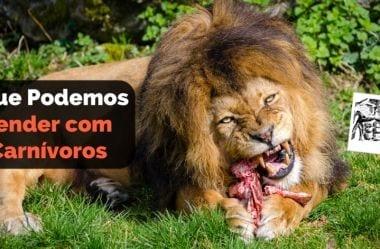 Dieta Carnívora: 8 Lições Que Podemos Aprender Com Os Carnívoros